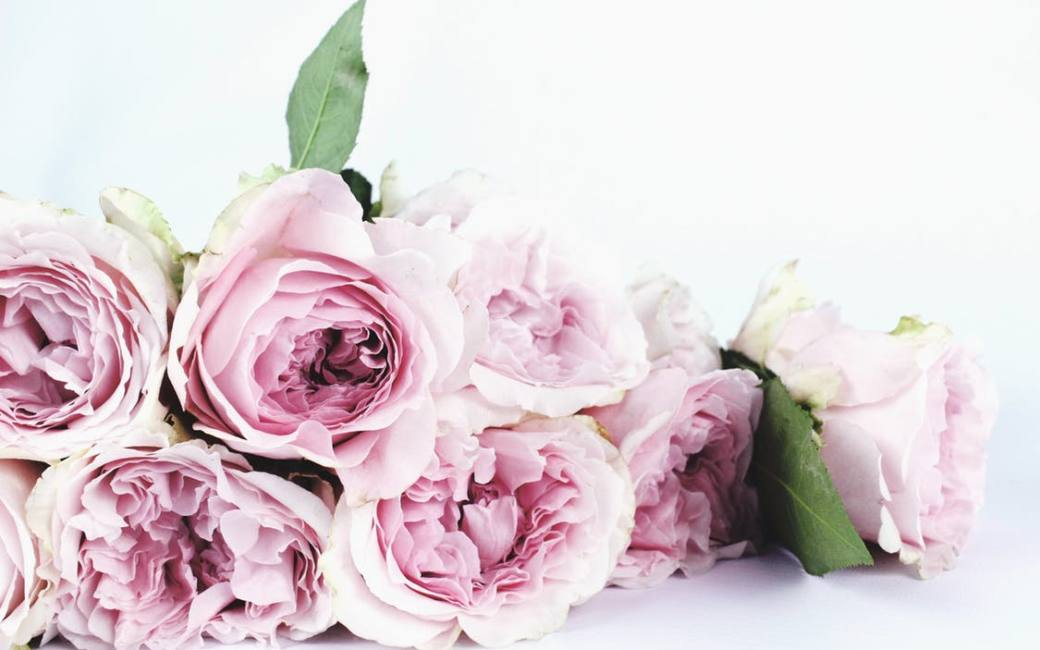 Vendor spotlight the petal cart dreamgate events once a month dreamgate events loves to showcase our favorite vendorsawesome people who love what they do and are fantastic at it mightylinksfo